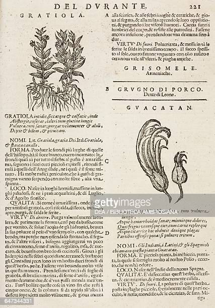 Gratiola and Guacatan page from the Herbario Nuovo by Castore Durante engravings by Leonardo Norsini Parasole and Isabella Parasole edition of 1636