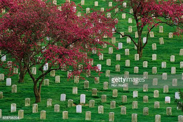 grave markers at arlington national cemetery - arlington national cemetery stock pictures, royalty-free photos & images
