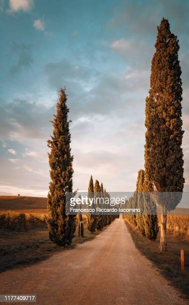 gravel country road with cypress trees in tuscany, italy - iacomino italy foto e immagini stock