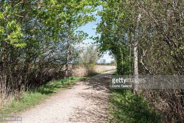 gravel path through a green area in copenhagen with a few tall buildings in the distance - dorte fjalland imagens e fotografias de stock
