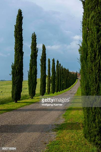 Gravel road going to farm house flanked by Italian cypress trees near San Quirico in the Val d'Orcia near Pienza in Tuscany, Italy.