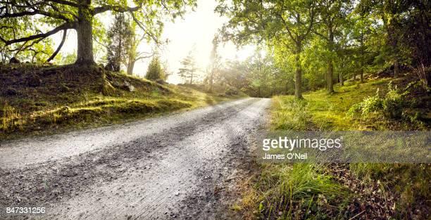 Gravel road through forest
