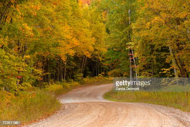 gravel road through hiawatha national forest, upper peninsula of michigan, usa - hiawatha national forest stock pictures, royalty-free photos & images
