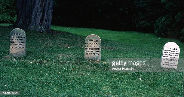 Graves for Susan Sugar and Heather the Queen's pet corgis buried on the Sandringham estate photographed on January 01 1980 in Sandringham England