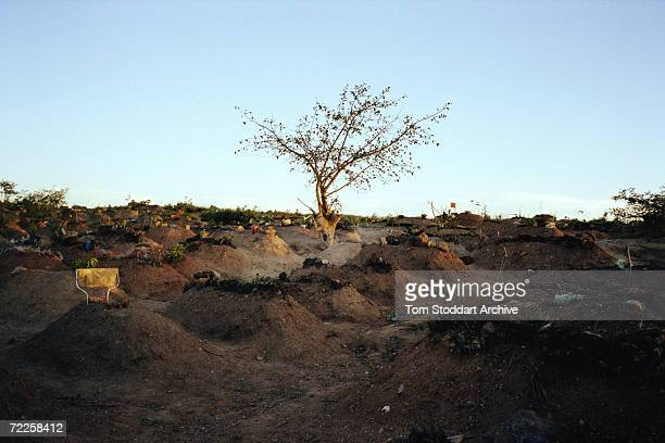 Graves in Chunga cemetery near Lusaka, Zambia, where thousands of victims of AIDS are buried, May 2002. The disease is killing 9,000 Africans every...
