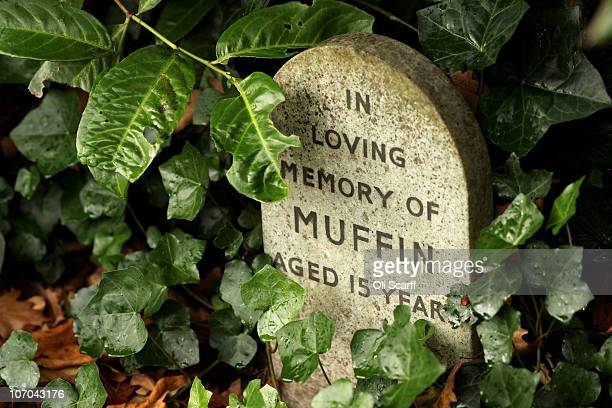 A gravestone for the deceased pet 'Muffin' stands in the Hyde Park pet cemetery on November 18 2010 in London England The cemetery is situated in the...
