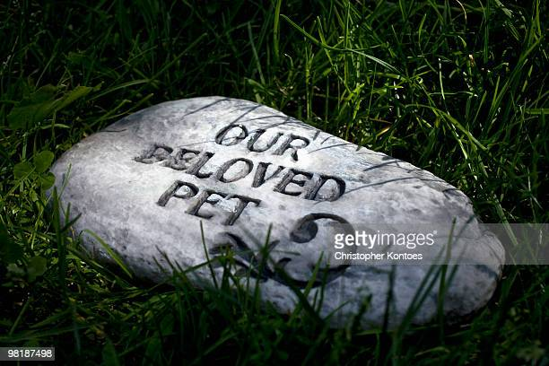 a gravestone in a pet cemetery - place concerning death stock pictures, royalty-free photos & images