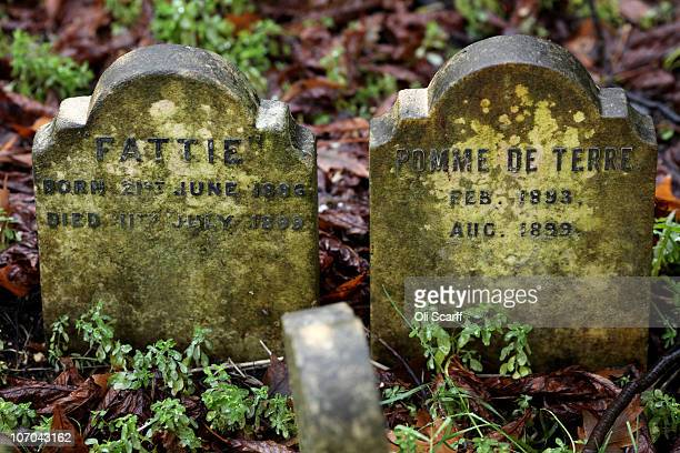 Gravestones for the deceased pets 'Fattie' and 'Pomme de Terre' who both died in 1899 stand in the Hyde Park pet cemetery on November 18 2010 in...