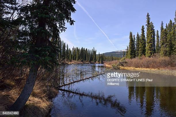 gravity beckons - río swift fotografías e imágenes de stock