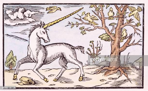 Gravure de la Cosmographie de Munster de 1543 représentant une licorne