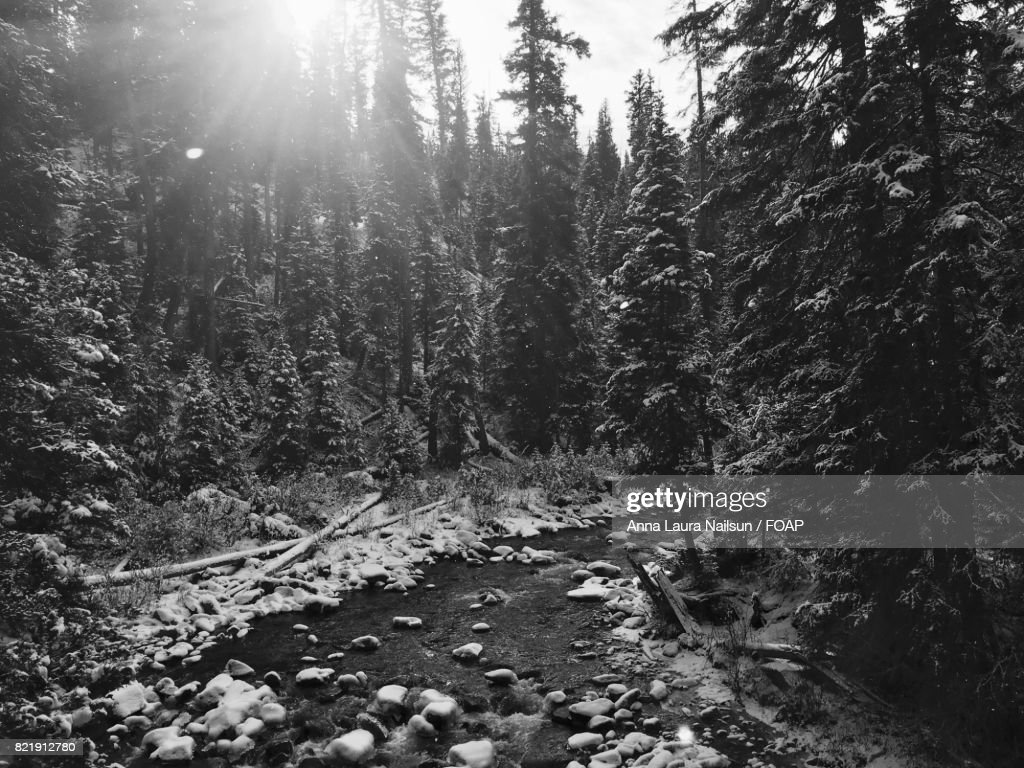 Gray at the river : Stock Photo