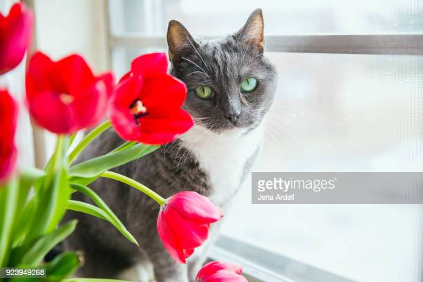 Gray Cat With Green Eyes Next To Spring Flowers