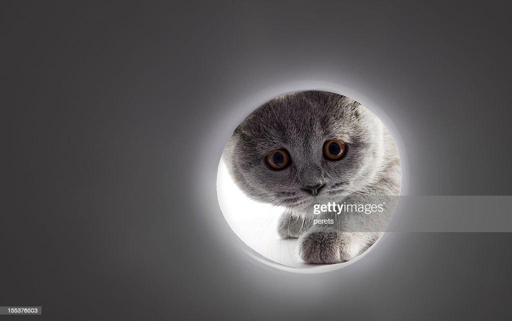 A gray cats face looking into a tunnel : Stock Photo