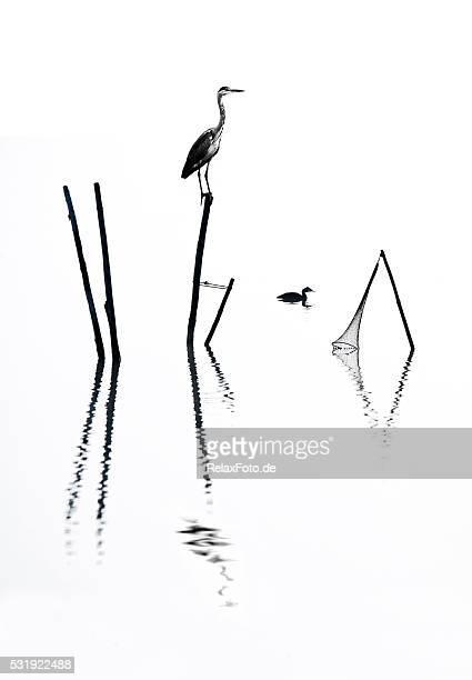 Graureiher sitzen auf der Stange, Fischfalle im Nebel