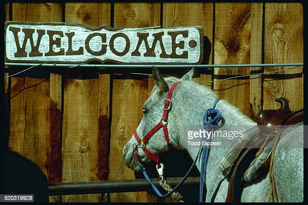 gray horse near welcome sign - gipstein stock pictures, royalty-free photos & images