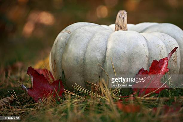 gray pumpkin in grass - lisa cranshaw stock pictures, royalty-free photos & images