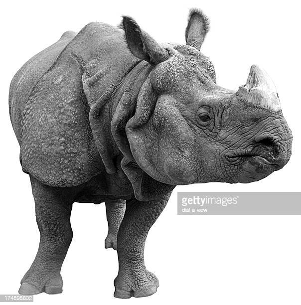 Gray rhinoceros on a white background