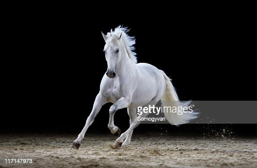12 613 White Horse Photos And Premium High Res Pictures Getty Images