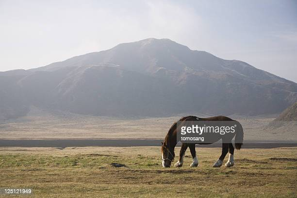 graze - kumamoto prefecture stock pictures, royalty-free photos & images