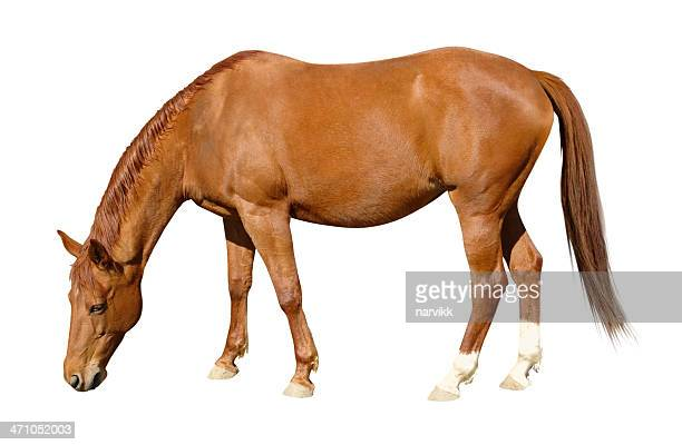 grazing brown horse - grazing stock pictures, royalty-free photos & images