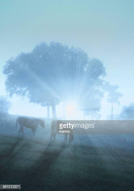 Grasen Pferd in mystic foggy Morgen Licht