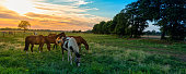 grazing horses in autumn on a horse pasture