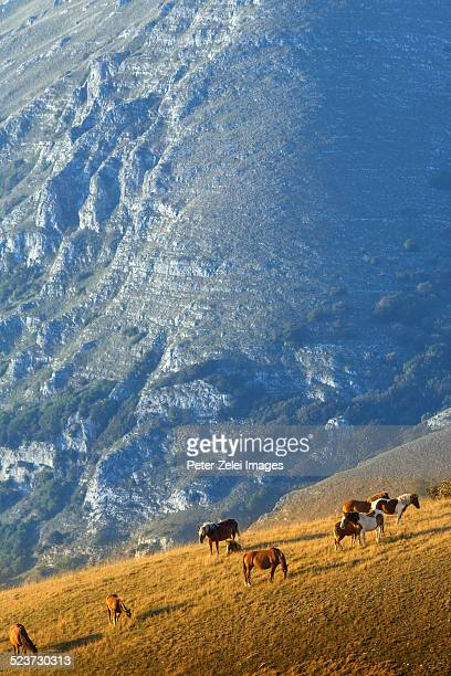 Grazing horses in Umbria