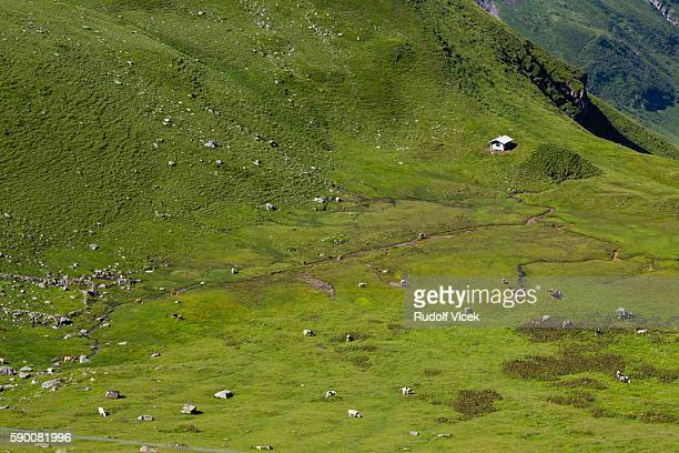 Grazing (pasture) land in european alps with cattle