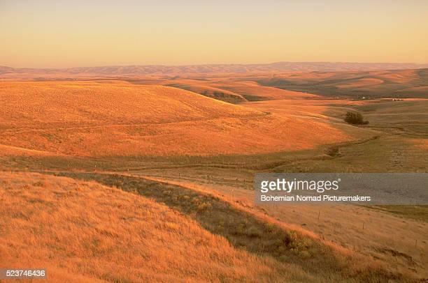grazing lands in eastern oregon - terreno coberto de grama - fotografias e filmes do acervo