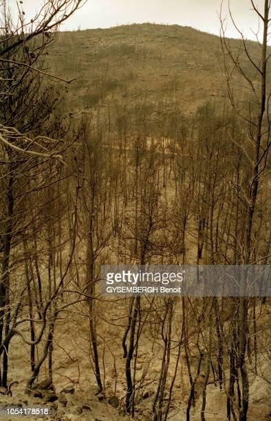 Grèce août 1998 Les forêts du mont Pentélique près d'Athènes ravagées par les incendies