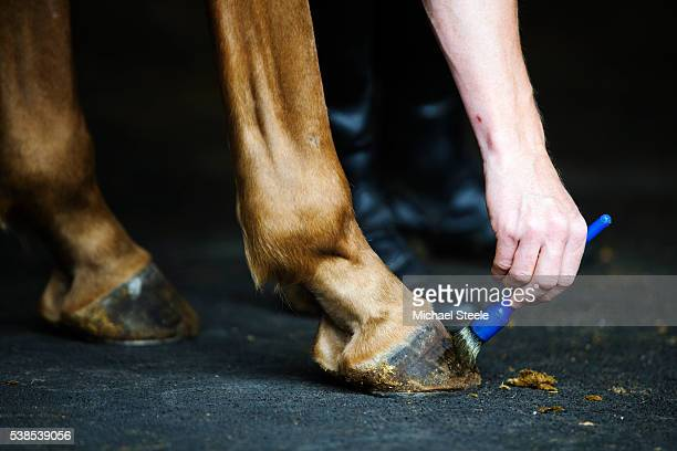 Grease is applied to hooves before exercise for better grip at Sandhill Racing Stables on July 22 2015 in Minehead England Sandhill Racing Stables...