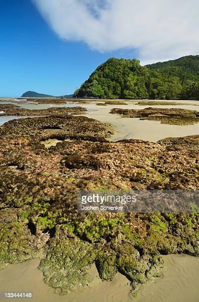 Great Barrier Reef meets rainforest