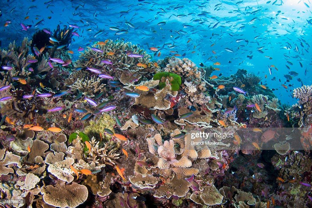 Great Barrier Reef : ストックフォト