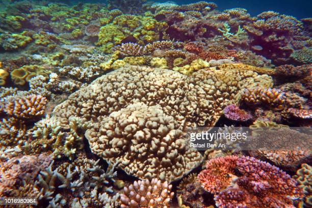 great barrier reef queensland australia - rafael ben ari - fotografias e filmes do acervo