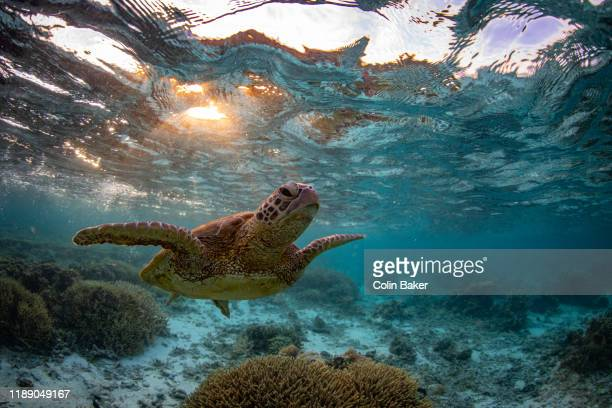 great barrier reef underwater landscapes and wildlife - great barrier reef stock pictures, royalty-free photos & images