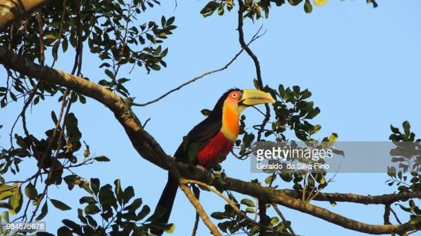 great bird - filho bildbanksfoton och bilder