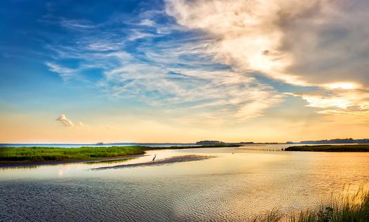 Great Blue Heron enjoying a golden Chesapeake Bay sunset 858285514