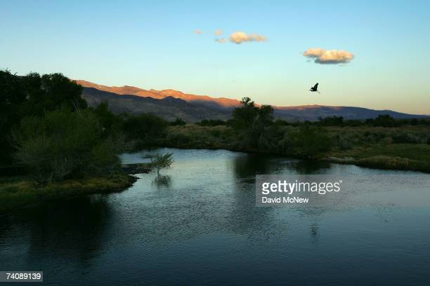 A great blue heron flies at dusk over the lower Owens River before it empties into Owens Lake on May 5 2007 near Lone Pine California The Los Angeles...