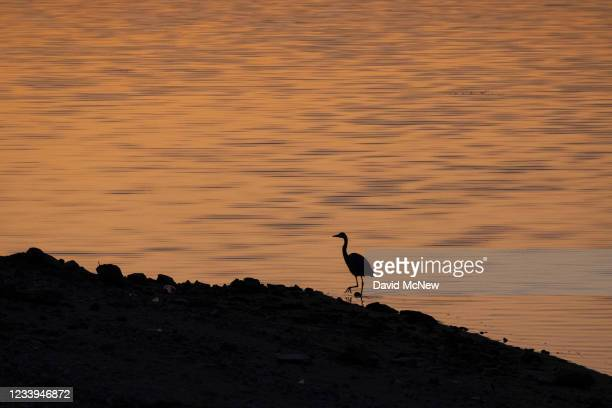 Great blue heron is seen at the diminishing waters of Lake Isabella, which is at 13% capacity and falling, on July 12, 2021 near Lake Isabella,...