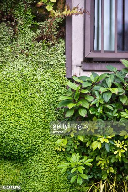 UK, Great Britain, England, London, View Of Foliage Growing Around Building Window