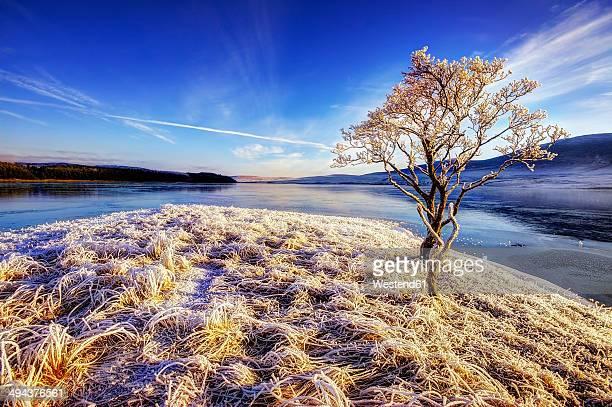 Great Britain, Scotland, Altnaharra, Loch, hoarfrost, snow and tree