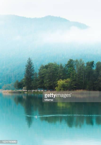 great crested grebe, woerthersee, austria, klagenfurt - クラーゲンフルト ストックフォトと画像