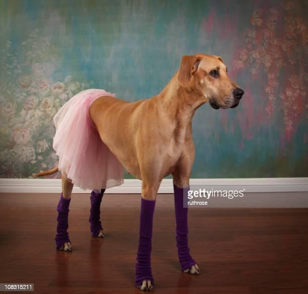 Deutsche Dogge-Ballerina