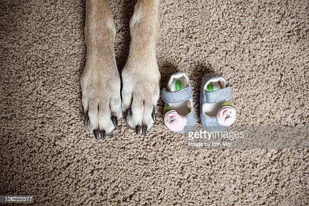 Great dane paws and baby shoes