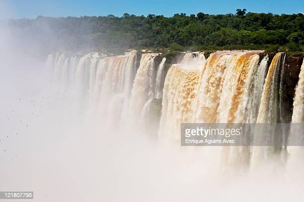 great dusky swift; vencejos de cascada (cypseloides senex), iguazu falls, argentina/brazil - geografia física - fotografias e filmes do acervo
