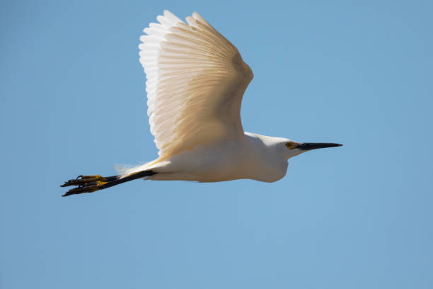 white heron question A white heron and other stories questions and answers the question and answer sections of our study guides are a great resource to ask questions, find answers.