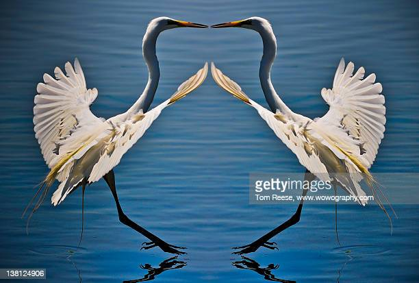 Great Egret mirror