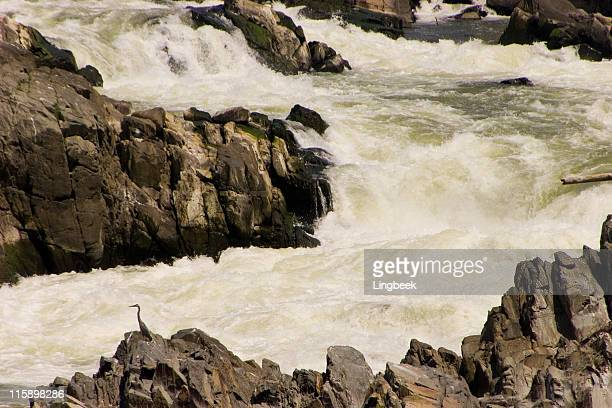 great falls of the potomac river - fairfax county virginia stock photos and pictures