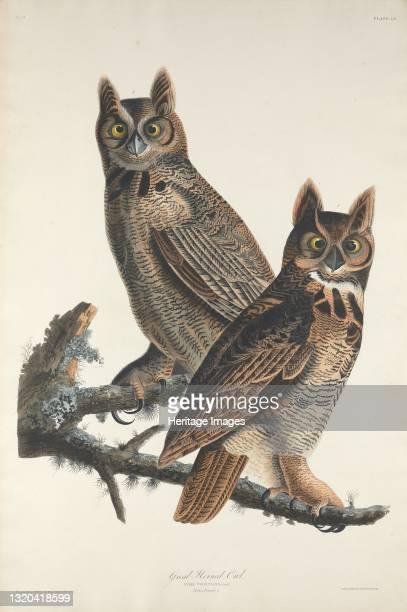 Great Horned Owl, 1829. Artist Robert Havell.