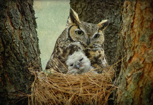 Great Horned Owl Mom And Baby Wall Art